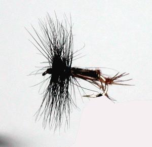 Stillwater Black Hopper (1 Dozen)