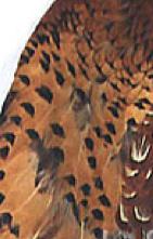 Veniard Cock Pheasant Wings