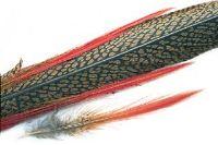 Veniard Golden Pheasant Complete Tail