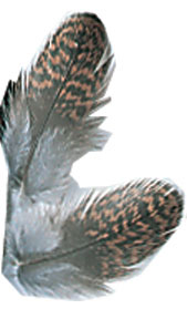 Red Grouse Body Plumage