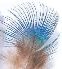 Veniard Peacock Blue Neck