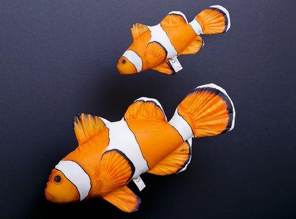 Gaby Ocellaris Clownfish