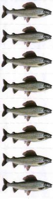Just Fish Sticker Grayling 3cm