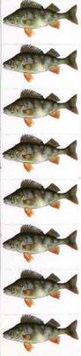 Just Fish Sticker Perch 3cm