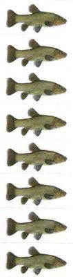 Just Fish Sticker Tench 3cm