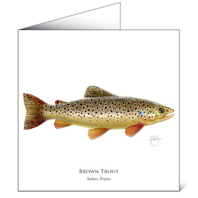 Mayfly Art Brown Trout Greetings Card