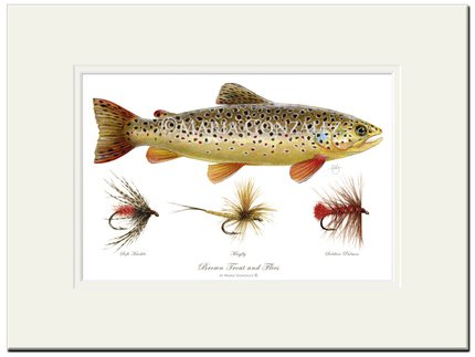 Mayfly Art Trout and Flies Signed Print
