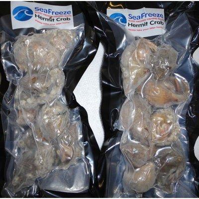 Seafreeze Hermit Crabs x 6-8