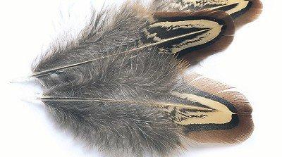 Veniard Cock Pheasant Brown Neck