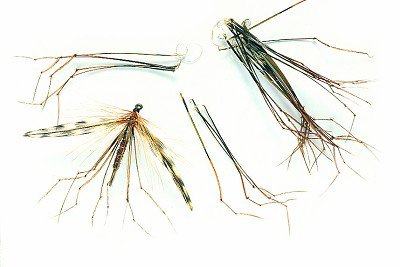 Veniard Daddy Legs Natural