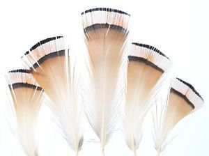 Veniard Golden Pheasant Tippet Packs