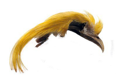 Veniard Golden Pheasant Topping Crest