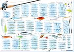 Angling Knots Predator Fishing Knots Poster