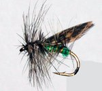 Stillwater Green Peter Sedge (1 Dozen)
