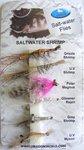 Dragon Saltwater Shrimp