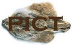 Fox Squirrel Body Patch