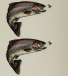 Just Fish Sticker Rainbow Trout 3cm