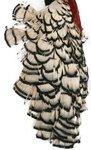 Lureflash Amherest Pheasant Crests