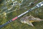 HTO Rockfish LRF Rods