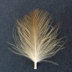 Turrall Cul De Canard Feathers
